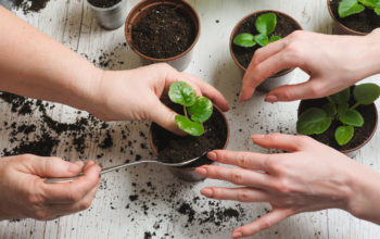 Gardening At Home Can Be Way To Get Peace In Stress!
