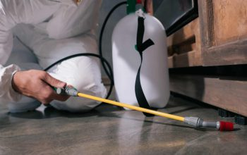 Why You Should Choose Pest Extermination For Your Pest Problems