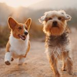 Should Your Family Picture Include Your Pet?