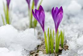 Flowers That Bloom During Winter