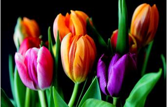 11 tips for keeping cut flowers fresh for longer