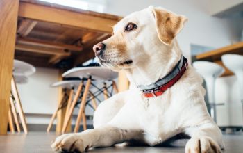 5 safe tips for looking after your pet on a budget