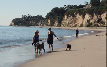 Top Beach Adventures in Los Angeles: Get a Glimpse of Life Outdoors
