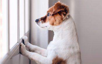 Best Ways to Care for a Dog With Separation Anxiety