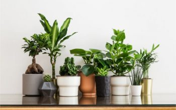 Looking to buy plants online? Here are some good choices for new plant owners!