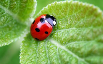 How To Stop A Pest Infestation Naturally?