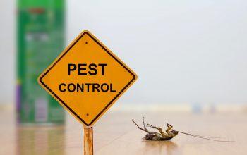 5 Ways To Find Pest Control Near Me
